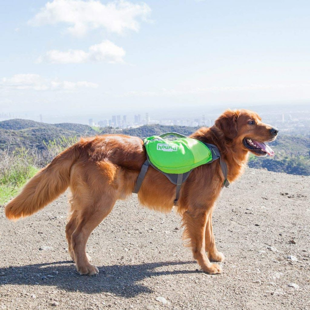 7 Great Accessories For Golden Retrievers The Dog People By Rover Com