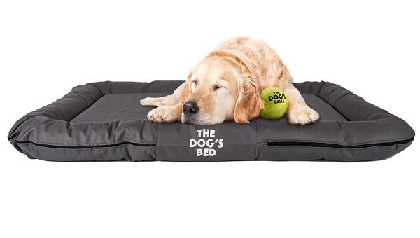 Top 6 Dog Beds for Golden Retrievers