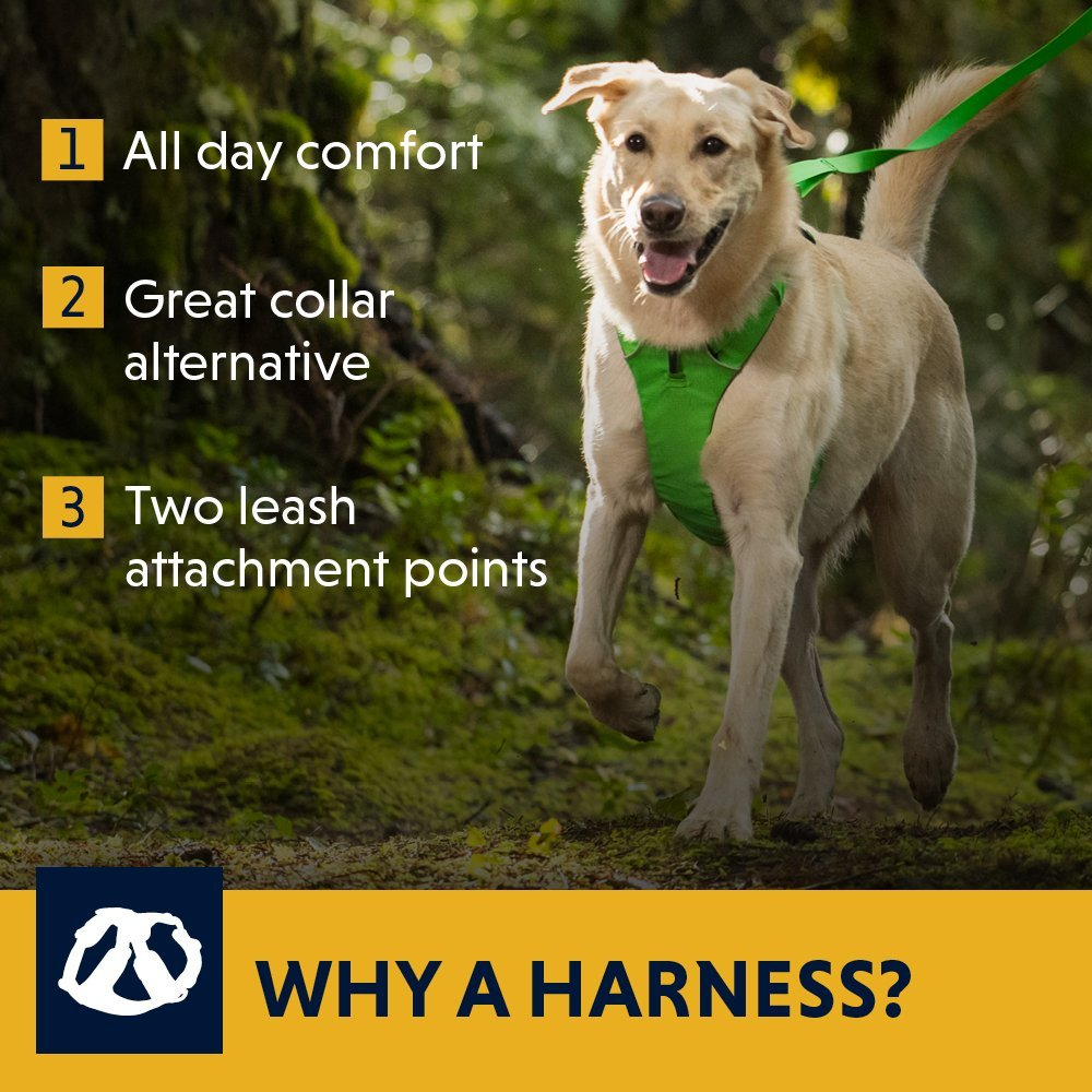 Best Everyday Harness Ruffwear Front Range