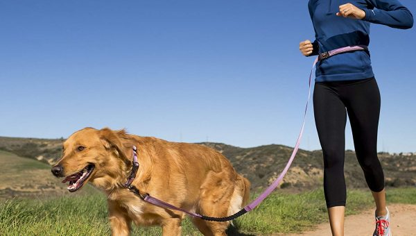 Top 6 Leashes for Golden Retrievers