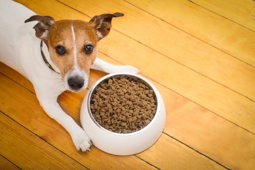 Does Dog Food Go Bad The People