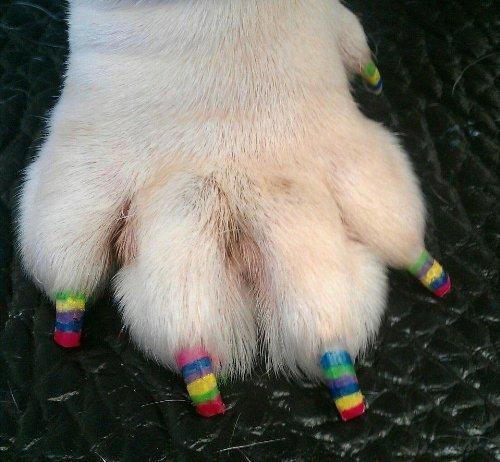 Pawdicures Pet Nail Polish