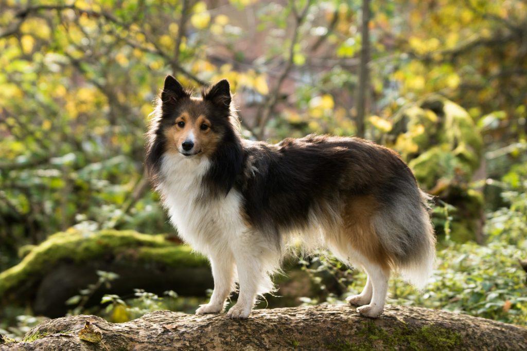 chien dans la forêt