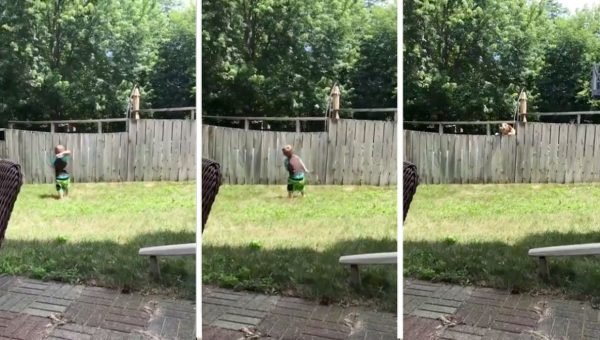 Neighbor's Clever Dog Will Stop at Nothing to Play Fetch with Toddler