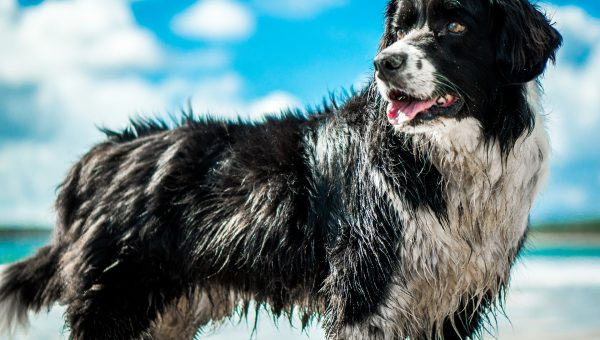 10 Beach Essentials for Your Dog That May Surprise You