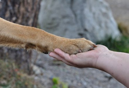 A dog paw placed in a human hand like a handshake.