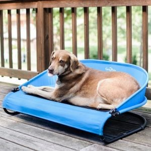 dog on Gen7Pets mesh cot