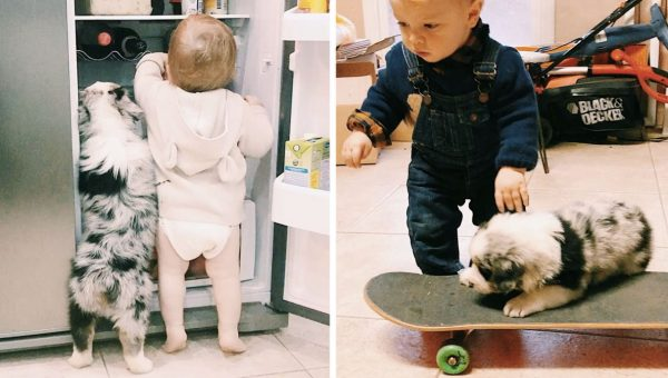 Adorable Aussie Puppy and Toddler Do Everything Together—Even Skateboard