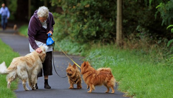 A Veterinarian's Tips to Keep Your Senior Dog Moving