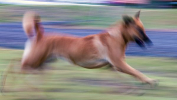 The Weirdest Dog Subreddit Is Full of Blurry Photos—Here's Why It's Great