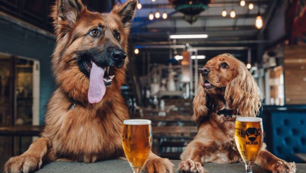 London's 50 Most Dog-Friendly Pubs