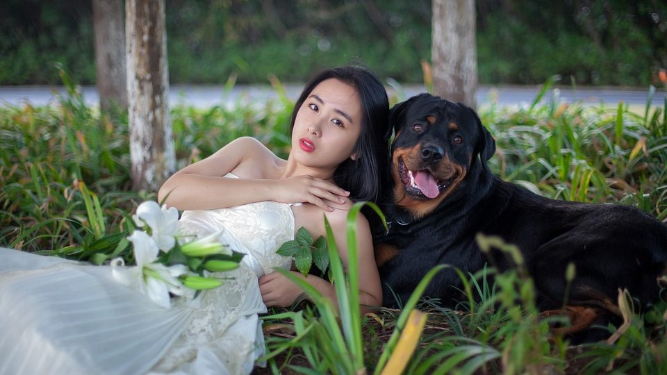 Dog-Friendly Wedding Venues in Chicago | Have Dogs in Your Wedding