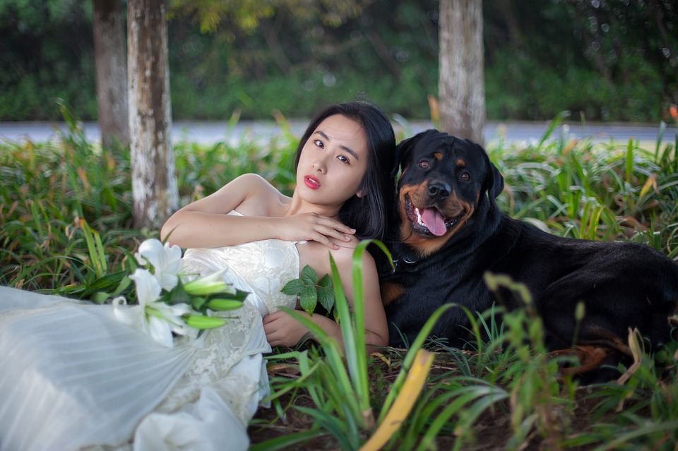Dog Friendly Wedding Venues In Chicago Have Dogs In Your Wedding