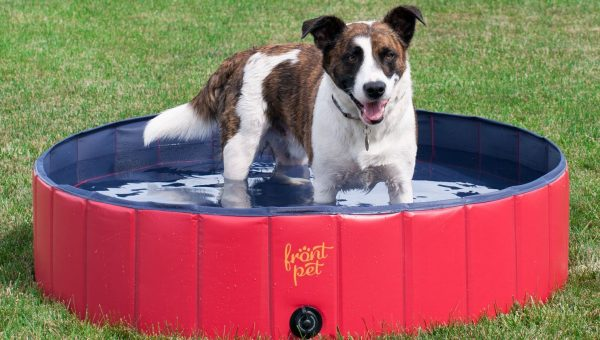 7 Best Cooling Products for Dogs