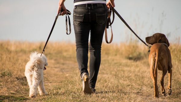 Ask a Vet: What's the Best Way to Exercise my Dog in Hot Weather?