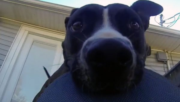 Viral Video Gives You a Dog's Eye View of a Good Game of Chase