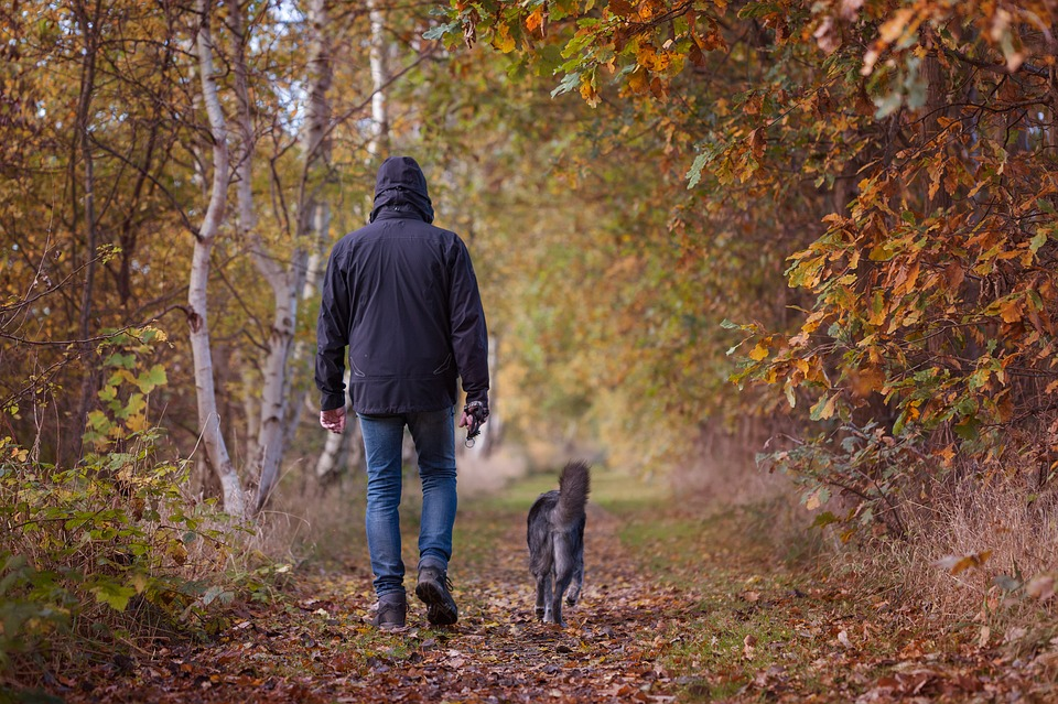 A man walks his dog in an autumnal forest