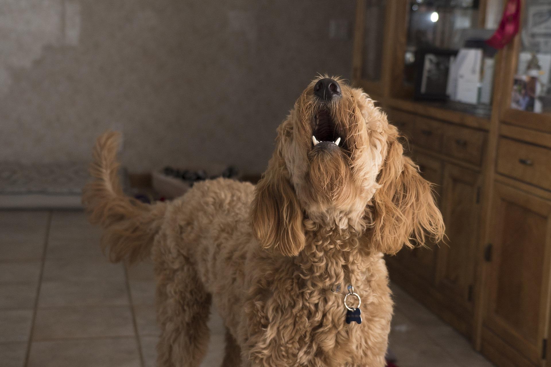 La Voz De Tu Perro Una Guía De Los Sonidos Caninos The Dog People By Rover Com