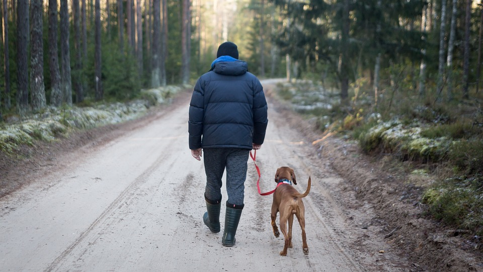 A man walks his Rover dog in the woods.