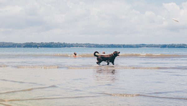 how to prevent your dog from drinking saltwater