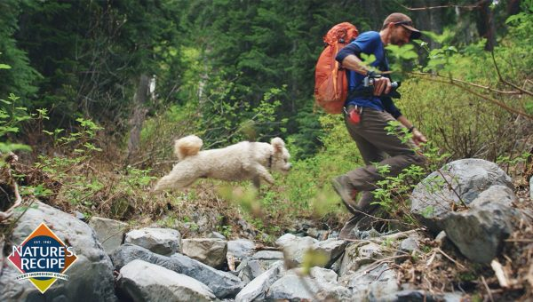 Meet Pablo – A Little Dog Living a Big Adventure [Video]