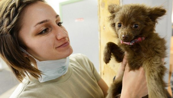 Puppy Vaccine Reactions: What to Expect and When to Worry