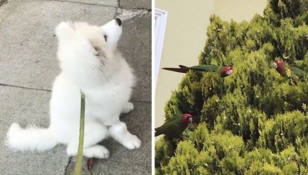 Puppy Meets The Wild Parrots of Telegraph Hill in Disney Movie Come to Life