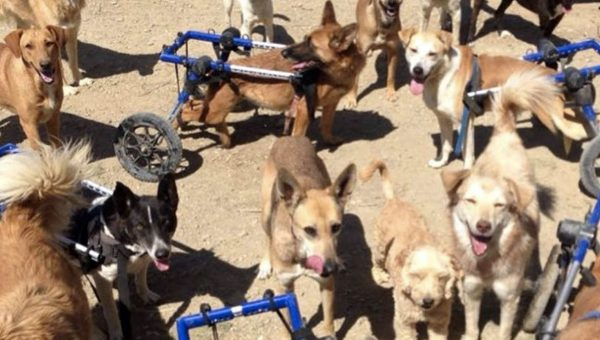 wheelchair dogs fun sanctuary morocco HERO