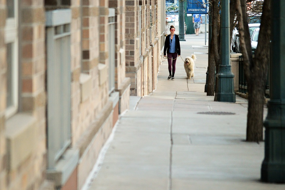 A woman walks her Rover dog in the city.