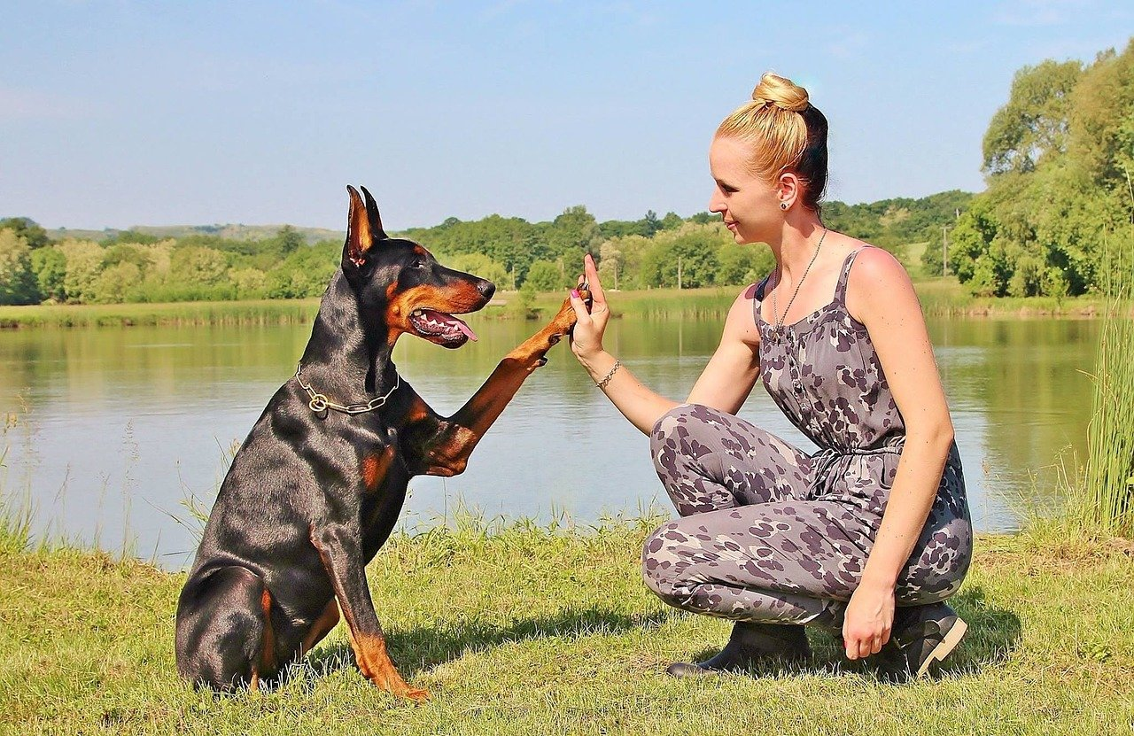 9 Things You Probably Don't Know about the Doberman Pinscher | The