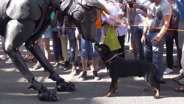 Caught on Video: The Moment This Rottweiler Met a Giant Dog Puppet