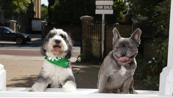 House-Hunting? Take Your Dog with You