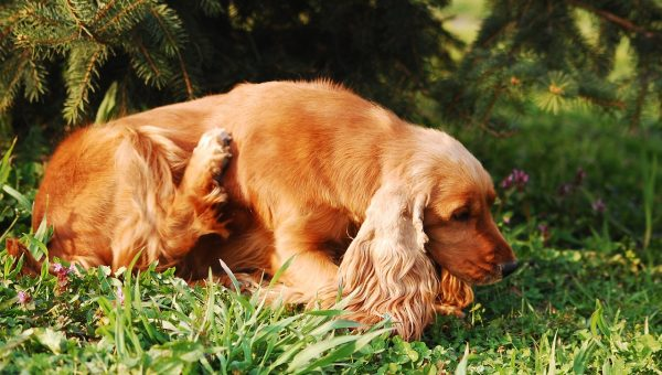 A Vet's Guide To Treating Your Dog's Dry Skin