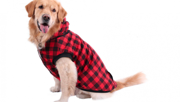 The Best Dog Hoodies to Keep Your Dog Comfy This Fall