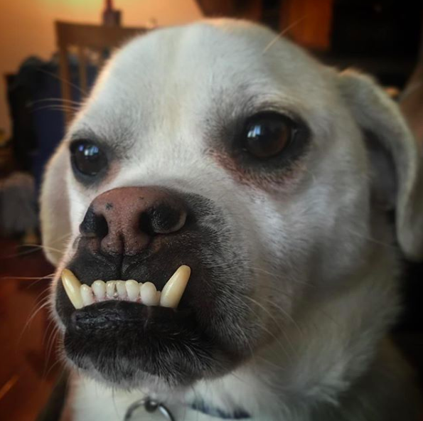 Weird Photos Dog 6