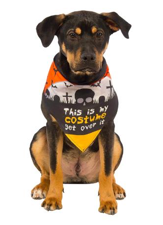 dog in Halloween-themed bandanna