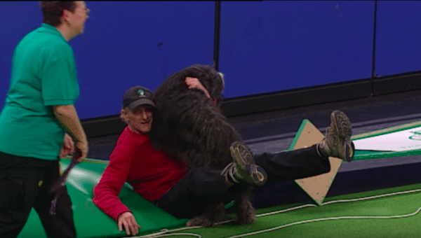 Agility Dog Just Keeps Running Straight into Dad in Hilarious Viral Clip