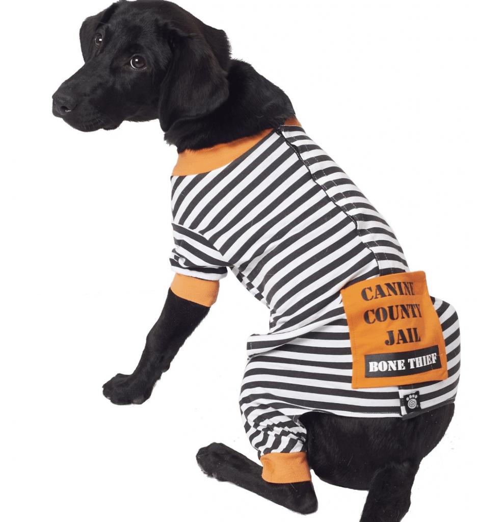 Lookin/' Sharp Dog Bandana