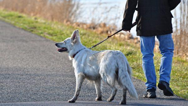 How Long Should I Walk My Dog Each Day?