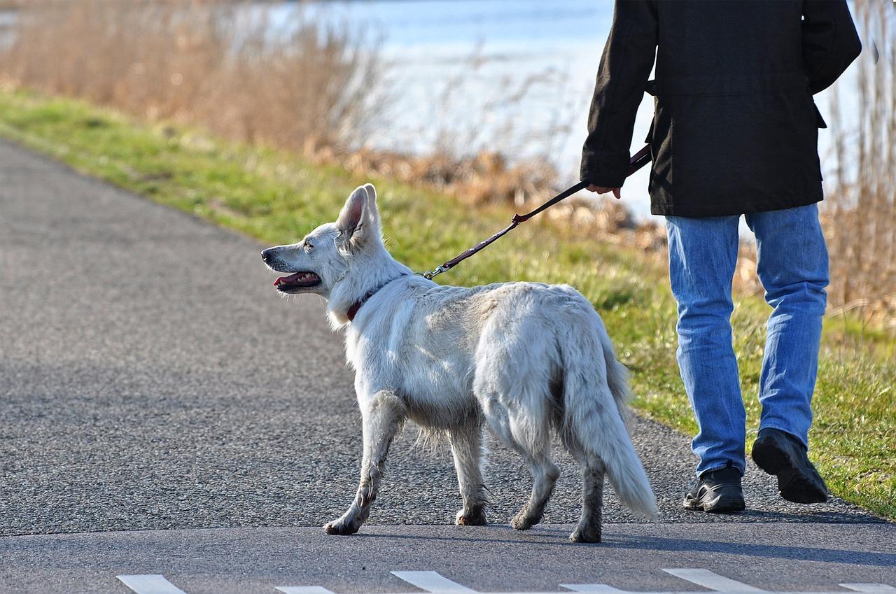 Dog Walking Name Generator