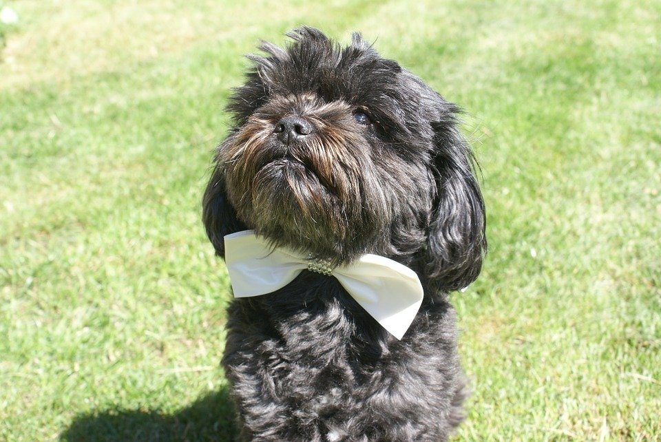 142 Best Regal Dog Names of 2018 with Popularity | The Dog