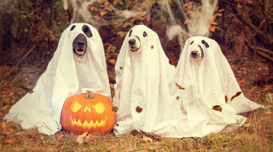 Halloween Dog Names | 117 Fall Choices from Spooky to Sweet