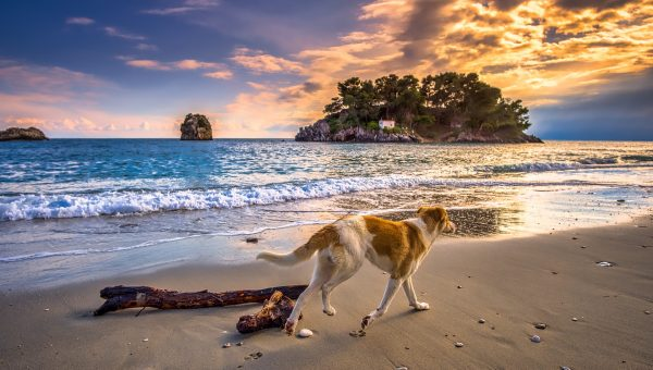The 85 Best Greek Dog Names of 2018