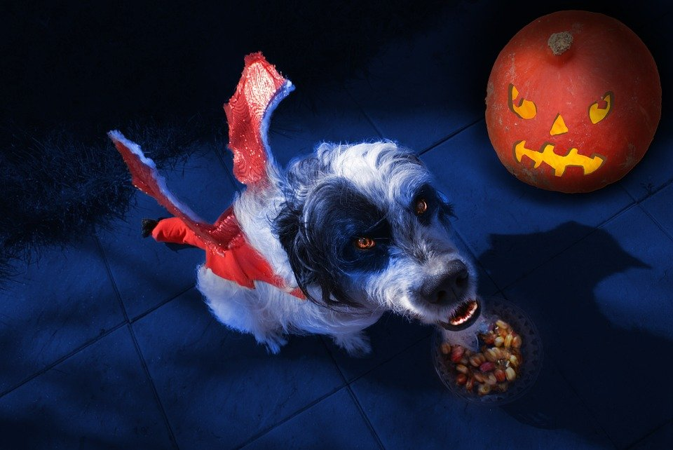 A spooky devil dog waits for its Halloween dog name.