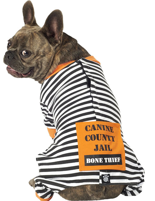 Halloween for Dogs Who Don't Do Costumes: Top 12 Costume Alternatives