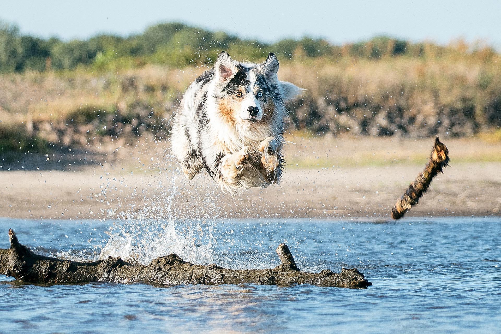 australian slang dog