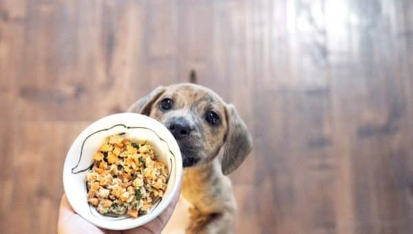 Vegetables Dogs Can Eat | 11 Fruits and Veggies Good for Dogs
