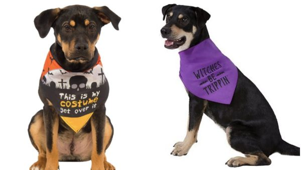 Halloween for Dogs Who Don't Do Costumes: 12 Top Costume Alternatives