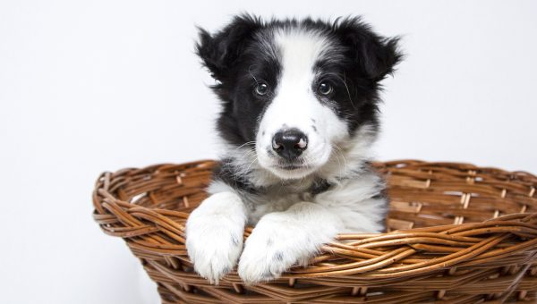 107 Best Black and White Dog Names