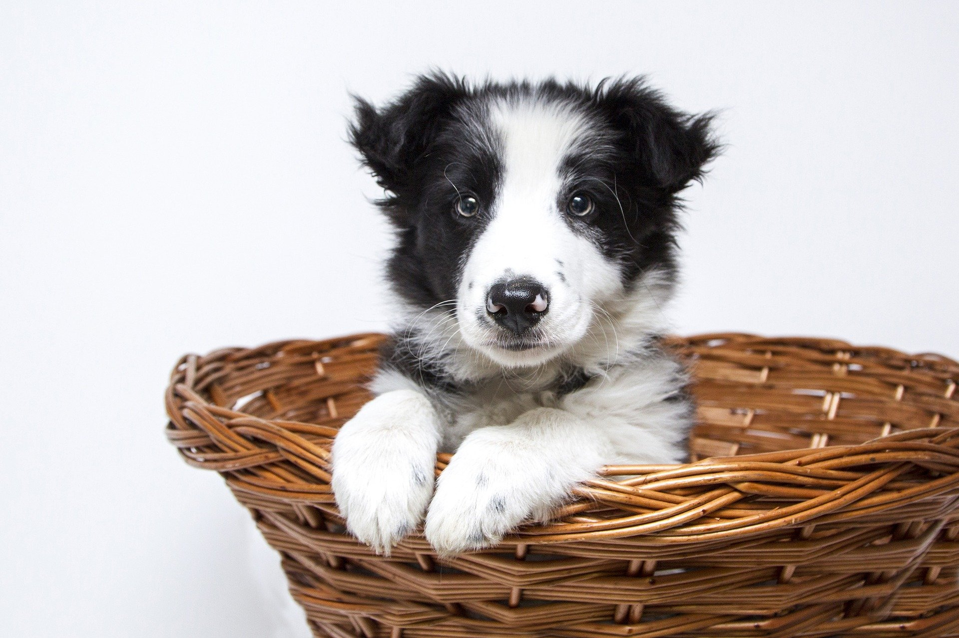 107 Best Black And White Dog Names For 2019 The Dog People